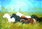Corona Paola - Cavalli liberi